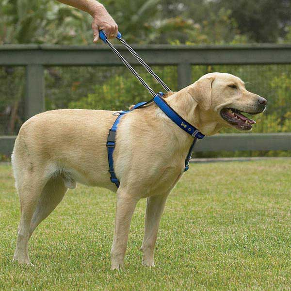 Patento Pet Dog Harnesses and Leash - Blue