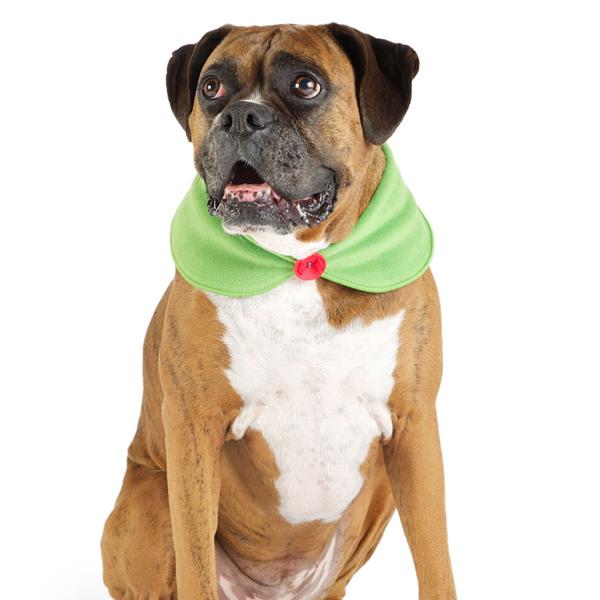 Peter Pan Dog Collar by Gold Paw - Green