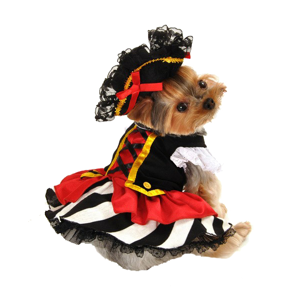 Pirate Girl Halloween Dog Costume