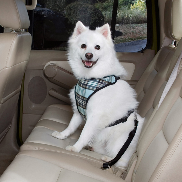 Plaid Car Harness by Guardian Gear - Blue