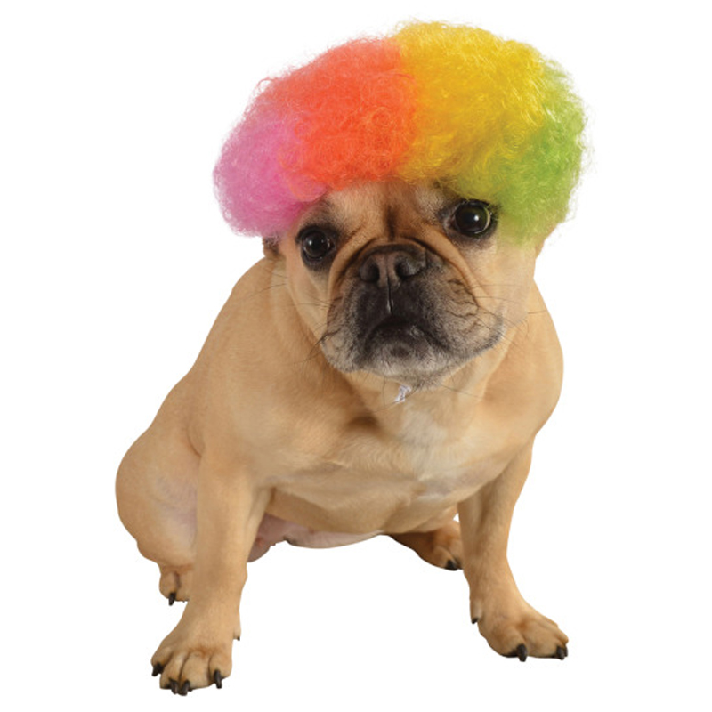 Rainbow Afro Wig Dog Costume