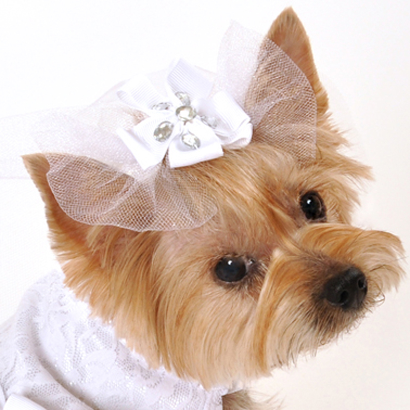 Satin and Lace Dog Veil
