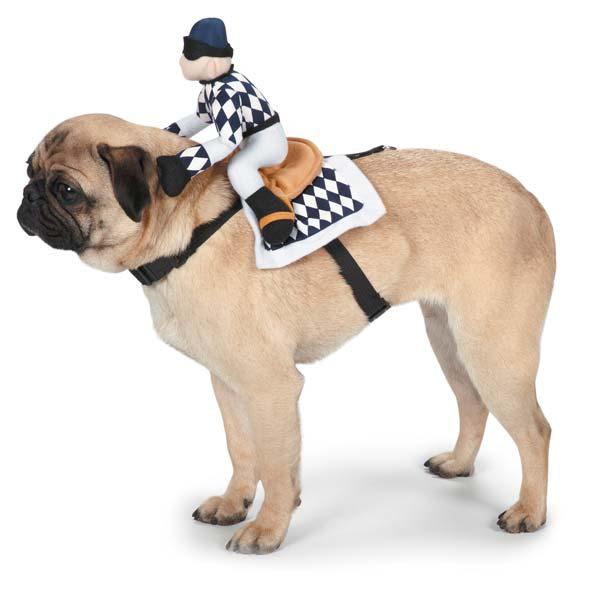 Show Jockey Saddle Dog Costume