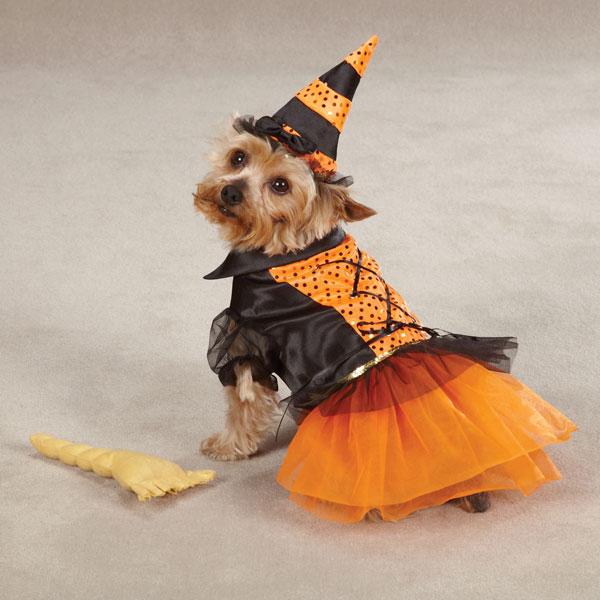 Spellhound Witch Halloween Dog Costume