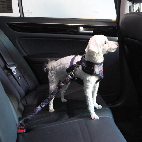 Vogue Dog Seatbelt Leash by Puppia - Navy