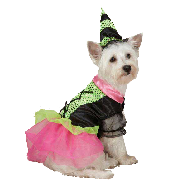 Witchy Business Halloween Dog Costume - Green