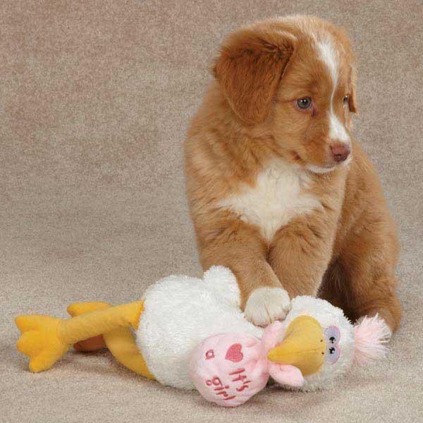Zanies Silly Storks Dog Toy - Girl
