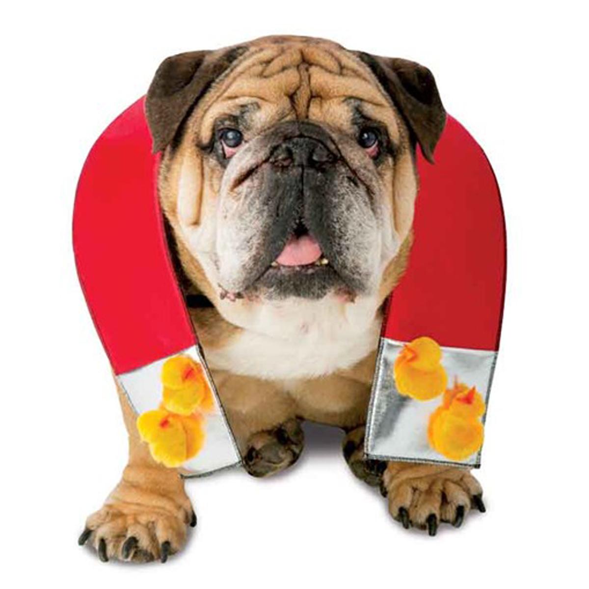 Zelda Chick Magnet Halloween Dog Costume