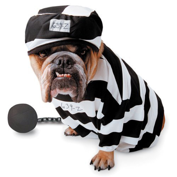 Zelda Prisoner Halloween Dog Costume