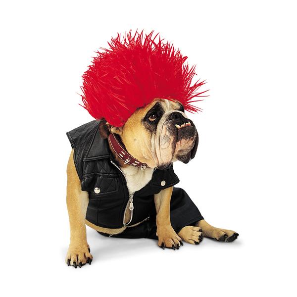 Punk Rock Halloween Dog Costume by Zelda