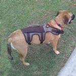 View Image 2 of Aussie 2 in 1 Backpack Harness