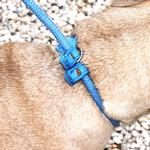 View Image 4 of Aussie Slip Dog Leash - Blue