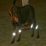 View Image 1 of Bright Steps Reflective Dog Leg Bands