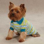 View Image 1 of Brite Stripe Dog Polo - Bluebird