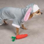 View Image 2 of Bunny Rabbit Costume for Dogs by Zack & Zoey