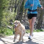 View Image 4 of Cardio Canine Hands Free Human Harness and Dog Leash