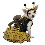 View Image 1 of Bee Dog Halloween Costume