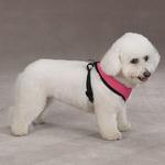 View Image 2 of Casual Canine Mesh Dog Harness - Pink