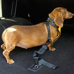 View Image 3 of Clickit Utilty Dog Harness by Sleepypod - Orange Dream