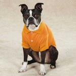 View Image 2 of Blooming Brights Dog Polo - Orange