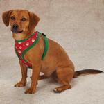 View Image 1 of Holiday Monkey Business Dog Harness - Tiff