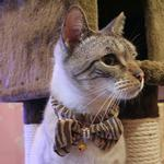 View Image 1 of Feline Neck Band by Catspia - Brown