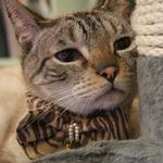 View Image 3 of Feline Neck Band by Catspia - Brown