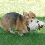 View Image 2 of GoDog Fuzzy Wuzzy Sheep Dog Toy - Brown