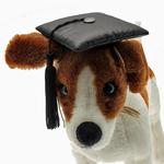 Graduation Cap Dog Hat