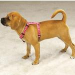 View Image 2 of Guardian Gear Two Tone Pawprint Harness - Pink