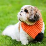 Hugglehounds Halloween Boo Dog Scarf