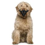 View Image 1 of Humunga Stache and Beard Dog Toy