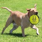 View Image 3 of Hyper Flippy Flopper Dog Frisbee