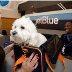 View Image 2 of JetPaws - Official Pet Carrier of JetBlue Airlines