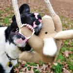View Image 2 of Kangaroo with Rope Dog Toy