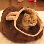 View Image 1 of Kitten House by Catspia - Brown