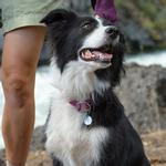 View Image 2 of Knot-A-Collar for Dogs by RuffWear - Purple Dusk