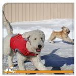 View Image 2 of Kurgo Surf n Turf Dog Lifejacket - Atomic Drop