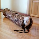 View Image 1 of Leopard Cat Tunnel