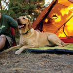 View Image 1 of Mt. Bachelor Pad Dog Bed by RuffWear - Forest Green