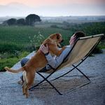 View Image 4 of Muck Dog Collar by Kurgo - Prepster Stripe Granite Gray