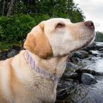 View Image 2 of Muck Dog Collar by Kurgo - Prepster Stripe Granite Gray