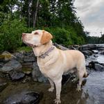 View Image 6 of Muck Dog Collar by Kurgo - Prepster Stripe Granite Gray