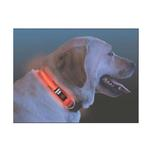 Nite Dawg LED Dog Collar - Orange