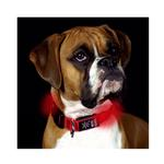 View Image 1 of Nite Dawg LED Dog Collar - Red