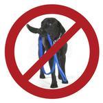 View Image 1 of Patento Pet Anti Bite Dog Leash - Blue