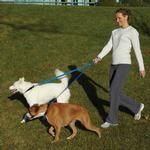 View Image 4 of Patento Pet Anti Bite Dog Leash - Blue