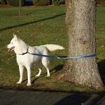 View Image 2 of Patento Pet Anti Bite Dog Leash - Blue