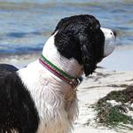 View Image 1 of Rainbow Trout Dog Collar by Dublin Dog