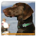 View Image 2 of Reflect and Protect Wander Dog Collar by Kurgo - Grass Green